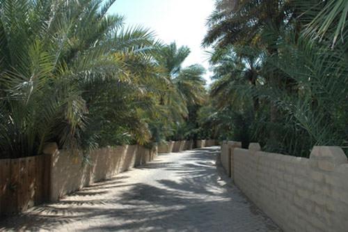 Al-Hasa Oasis, Saudi Arabia