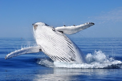 Best Places for Whale Watching