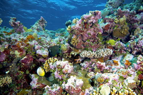 The Great Coral Reefs, Australia