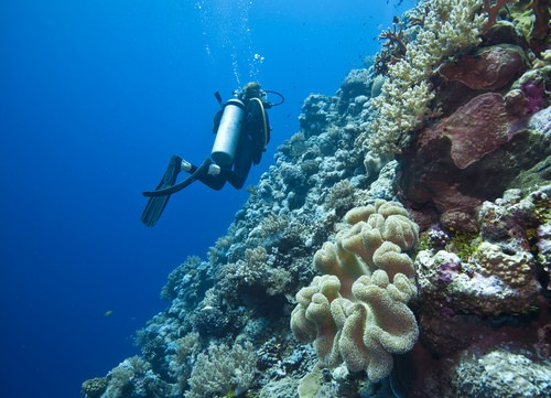 Enjoy Diving in the Great Barrier Reef
