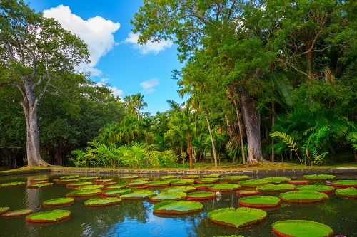 Most Beautiful Botanica Gardens in the World