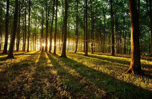 10 Most Beautiful Forests around the World