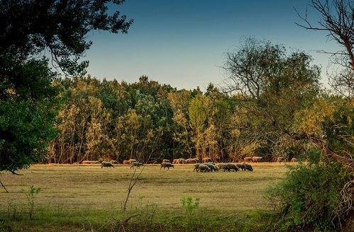 Balaton Uplands National Park Hungary
