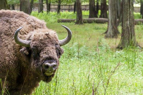 Biaowiea National Park Poland