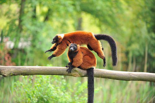 Masoala National Park Madagascar