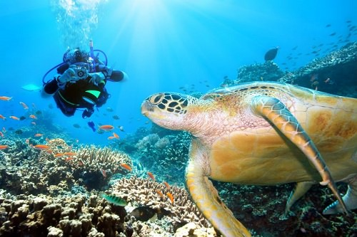 Best Places to Scuba Dive in the Atlantic Ocean