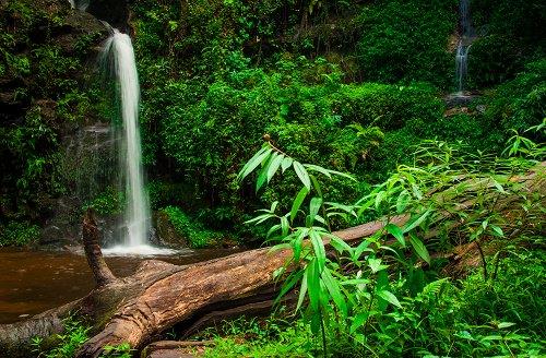 The jungle treks