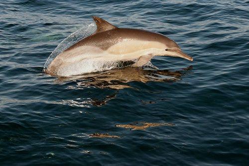 Go dolphin swimming