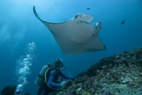 8 Captivating Scuba Sites in the World