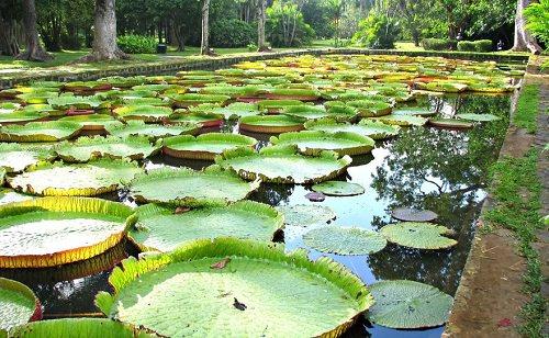 Pampelmousses Botanical Gardens