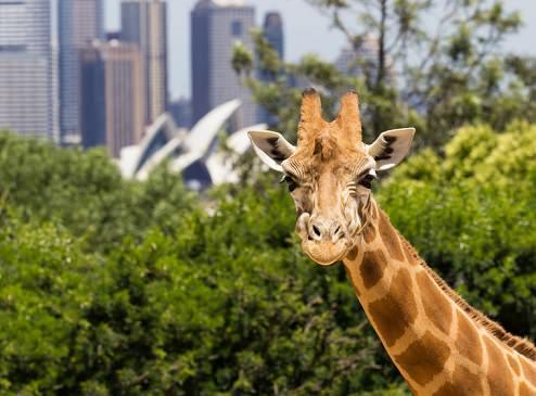 The Taronga Zoo