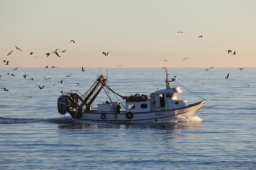 Try fishing in the Gulf Stream