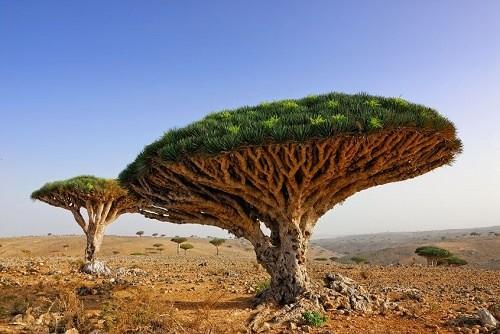 Yemen's Socotra