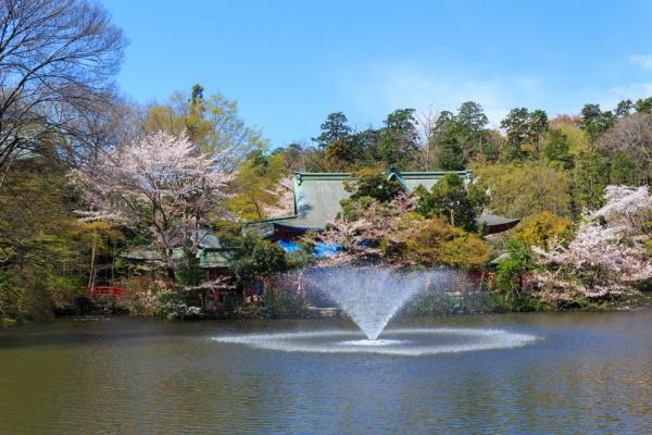 Inokashira Park and the Ghibli Museum